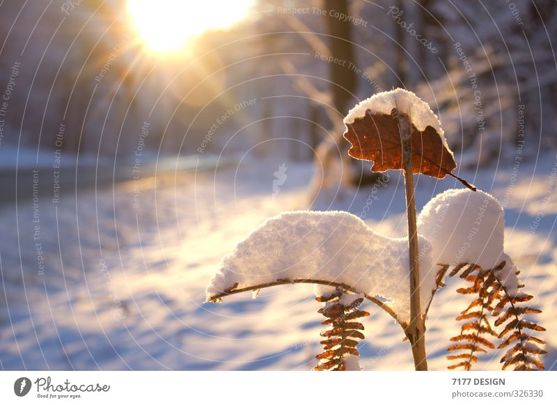 Nature Vacation & Travel Plant Summer Sun Landscape Leaf Winter Cold Environment Street Snow Spring Blossom Snowfall Ice