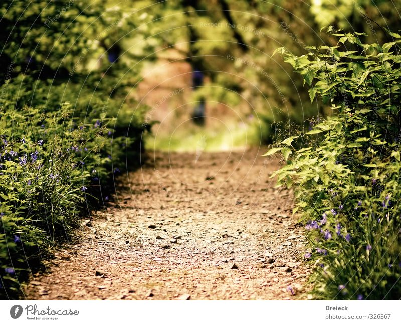 step into ... Hiking Environment Nature Summer Plant Bushes Leaf Foliage plant Wild plant Park Forest Lanes & trails Green Calm Relaxation Colour photo
