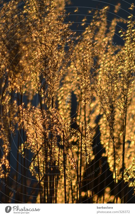 Infected Gold Rush. Nature Plant Sunlight Spring Bushes Garden Illuminate Growth Exotic Glittering Many Wild Moody Warm-heartedness Esthetic Mysterious Happy