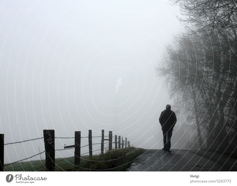 Rear view of a male person on a country road in the fog Human being Masculine Man Adults Male senior Senior citizen 1 60 years and older Environment Nature