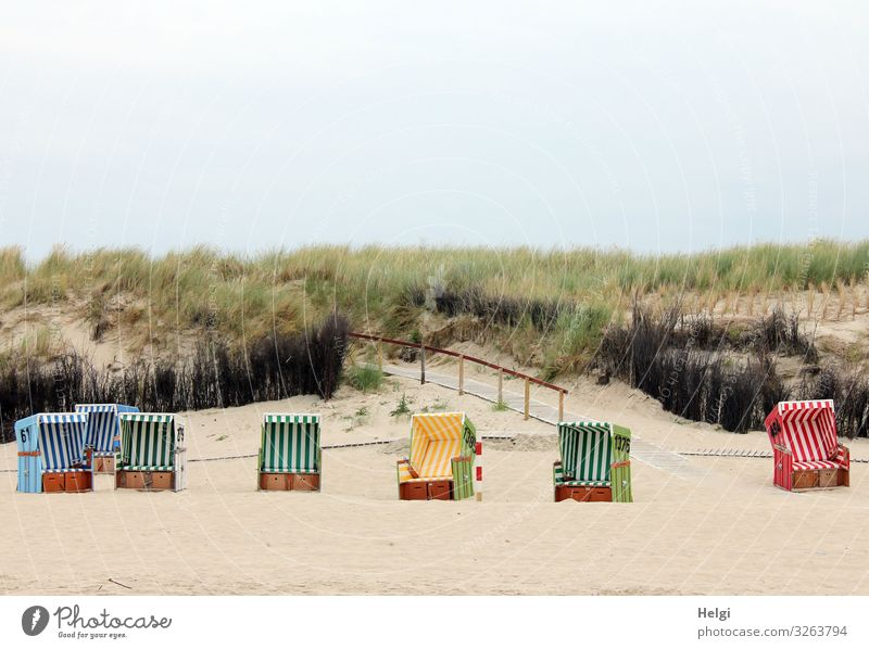 several empty beach chairs stand on the beach in front of the dunes Leisure and hobbies Vacation & Travel Tourism Beach Environment Nature Landscape Plant