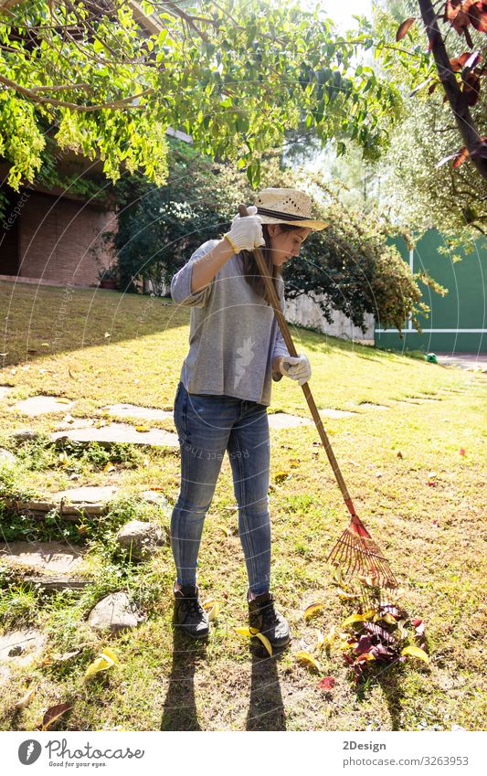 Young woman girl working in backyard raking collecting of autumn foliage oak leaves with green grass lawn tool equipment home outside 1 season activity