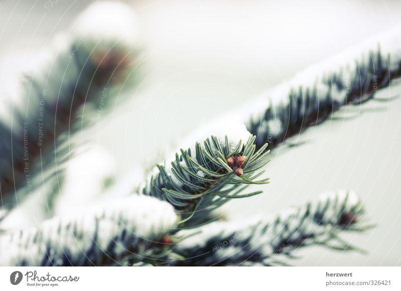 Nature Tree Landscape Calm Winter