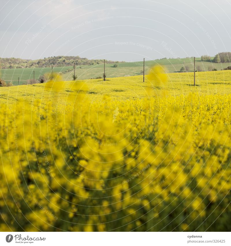 Oh - a rapeseed picture! Agriculture Forestry Environment Nature Landscape Sky Spring Beautiful weather Agricultural crop Meadow Field Hill Freedom Horizon