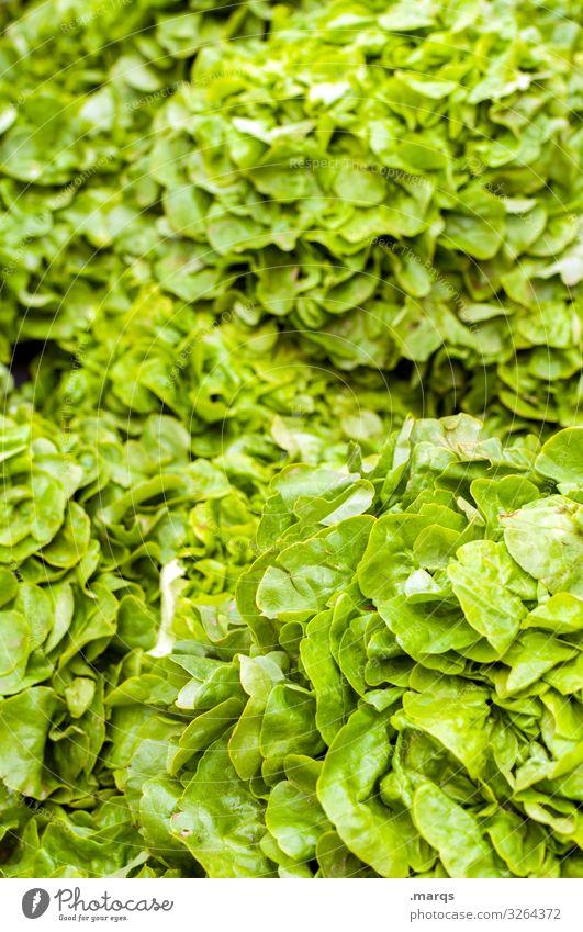 Salad leaves Food Lettuce Salad leaf Nutrition Organic produce Vegetarian diet Farmer's market Fresh Many Healthy Colour photo Exterior shot Close-up Deserted