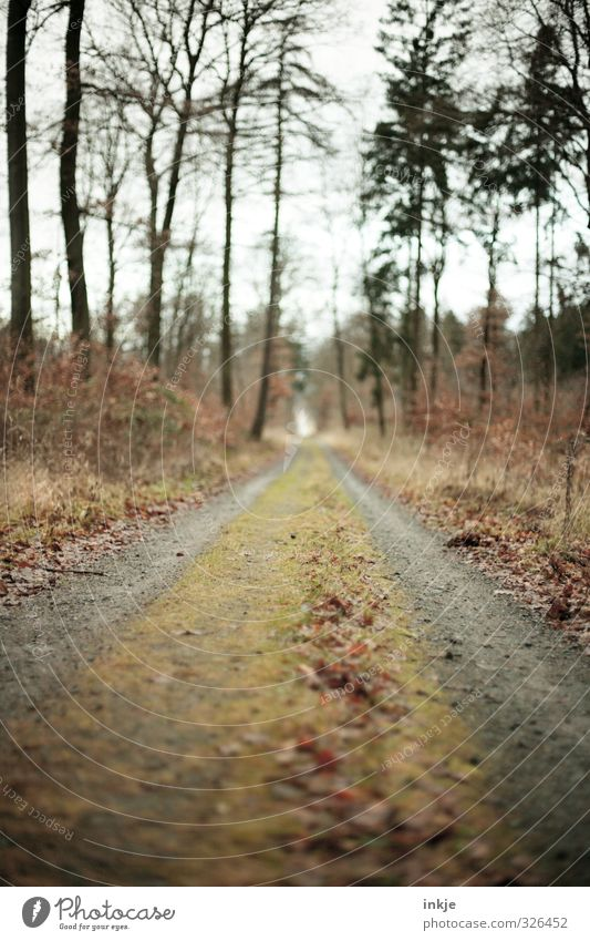 forest path Environment Nature Autumn Tree Grass Moss Park Forest Lanes & trails Footpath Vanishing point Colour photo Exterior shot Deserted Day Light Shadow