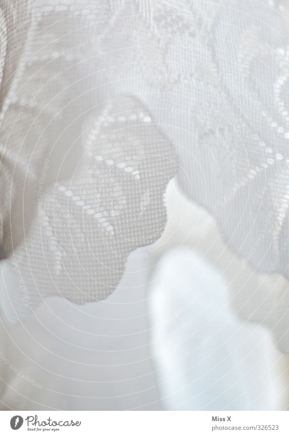 frills Decoration Wedding Cloth White Purity Frills Frill robe Drape Lace Vail Lace veil Colour photo Close-up Detail Pattern Structures and shapes Deserted