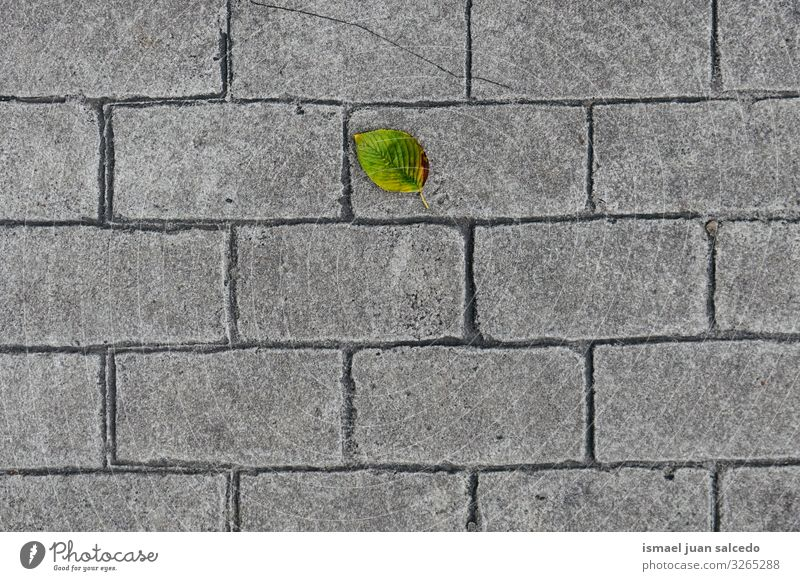 green leaf on the gray ground Leaf Green Loneliness Isolated (Position) Ground Gray Nature Natural Exterior shot Background picture Consistency Fragile Autumn
