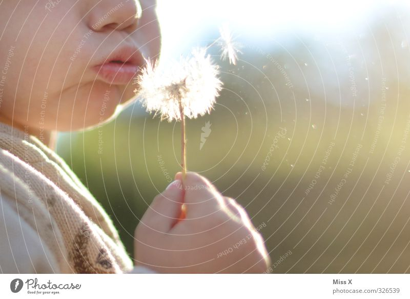 blow Children's game Human being Toddler Infancy 1 1 - 3 years 3 - 8 years Summer Flower Cute Joy Dandelion Blow Flying Air Colour photo Exterior shot Close-up