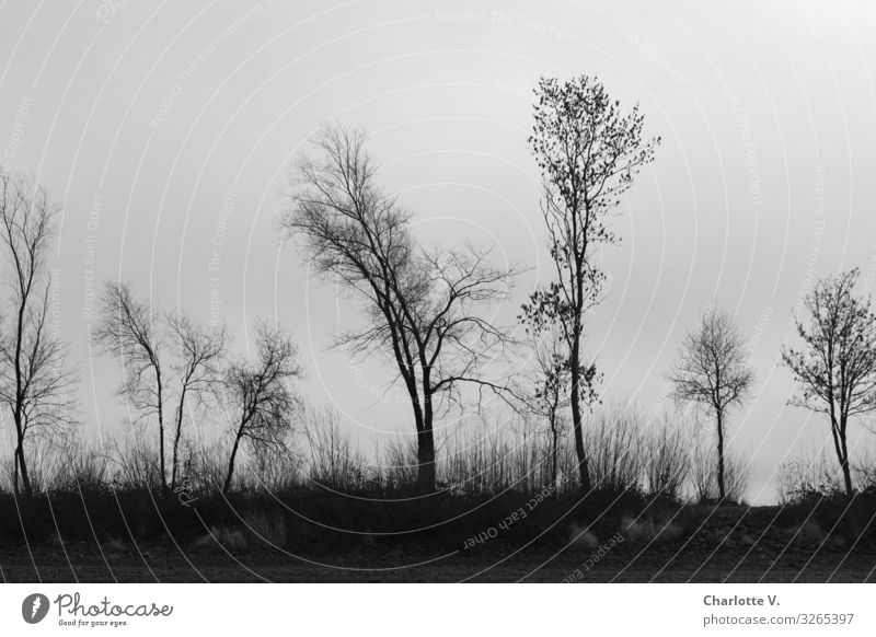 Nature Plant Landscape Tree Calm Winter Dark Black Wood Environment Sadness Death Gray Moody Elegant Esthetic