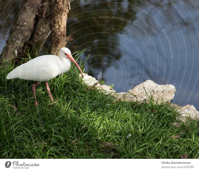 Nature White Plant Landscape Calm Animal Environment Meadow Grass Spring Coast Natural Bird Park Wild animal Wait