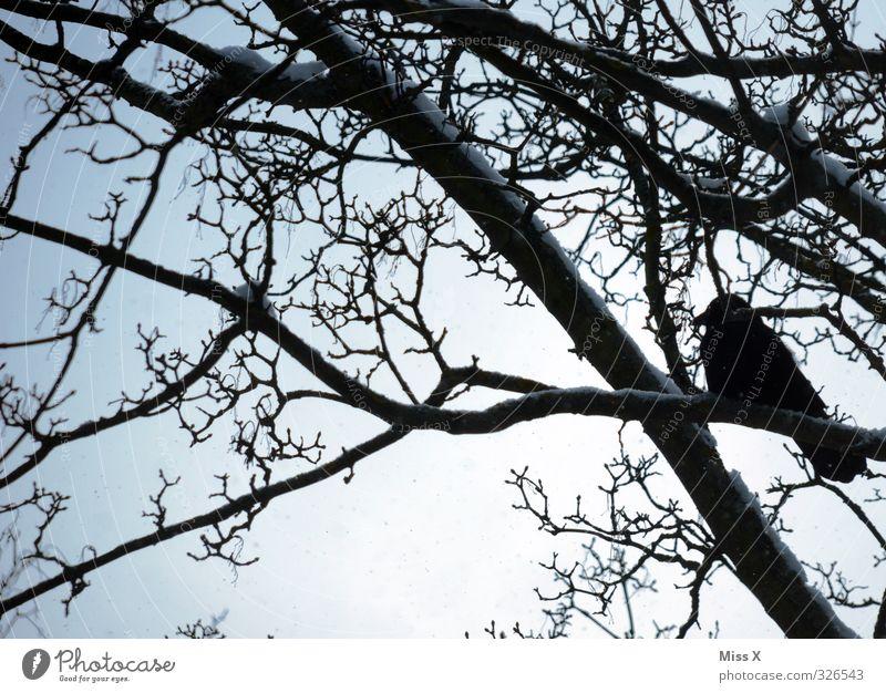 Tree Animal Black Winter Cold Snow Emotions Death Moody Bird Wild animal Branch Grief Twig Crow Winter activities
