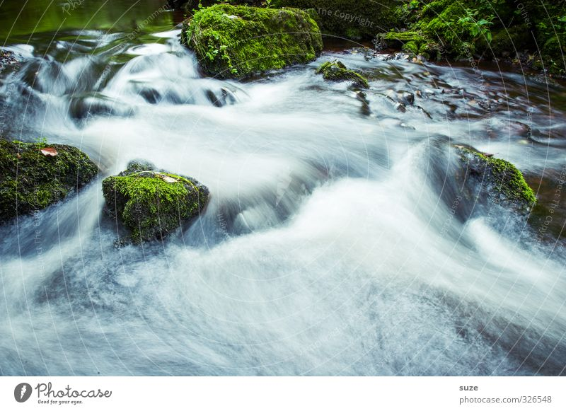 Nature Green Beautiful Water Plant Landscape Environment Stone Rock Natural Idyll Growth Fresh Speed Wet Elements