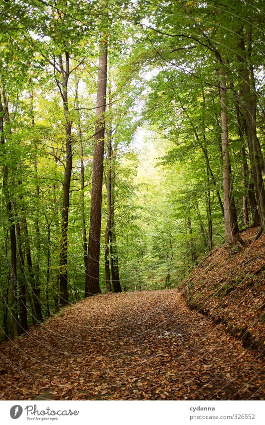 in the green Well-being Relaxation Calm Vacation & Travel Tourism Trip Adventure Freedom Hiking Environment Nature Landscape Autumn Tree Forest Loneliness