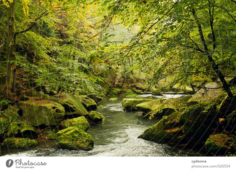 photo wallpaper Harmonious Relaxation Vacation & Travel Trip Adventure Hiking Environment Nature Landscape Water Autumn Tree Moss Forest Rock Brook River