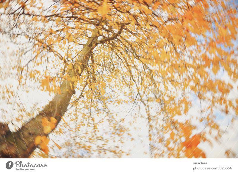 To celebrate the day .. Art Nature Autumn Climate Wind Tree Leaf Wood Orange Movement Creativity vertebra Rotate Dynamics Colour photo Multicoloured