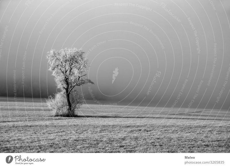 Winter landscape with a tree Background picture Beautiful Twig Bright Clarity Considerable Climate Cold Landscape Covered Dawn Day December Field Frost Frozen