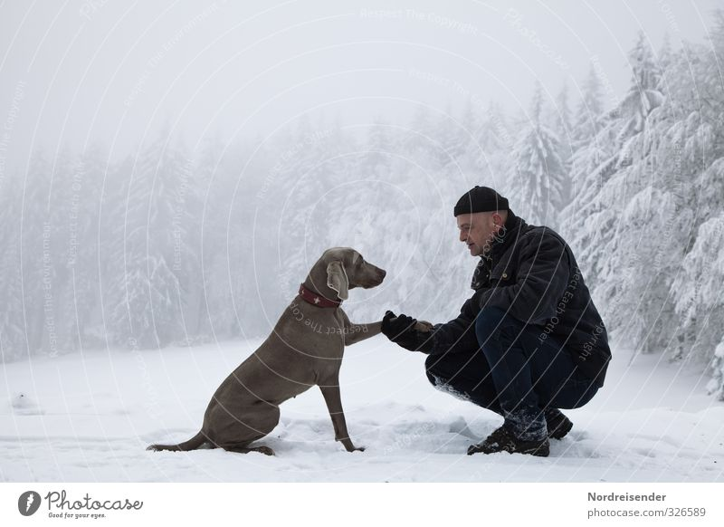 Dog Human being Man Relaxation Calm Winter Forest Adults Life Snow Friendship Power Climate Hiking 45 - 60 years Trip