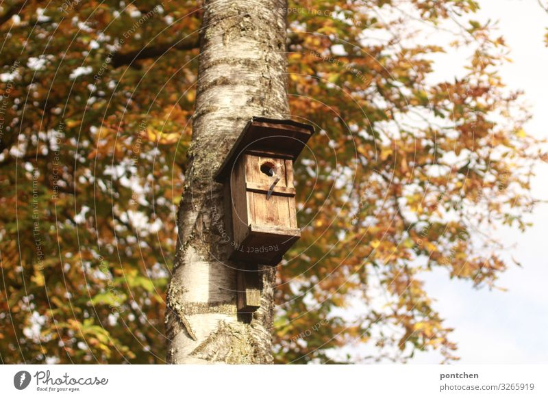 Birdhouse hangs on the tree in autumn Environment Nature Autumn bushes flaked Garden Park birds wood Responsibility Attentive Calm Birch tree Protection Safety