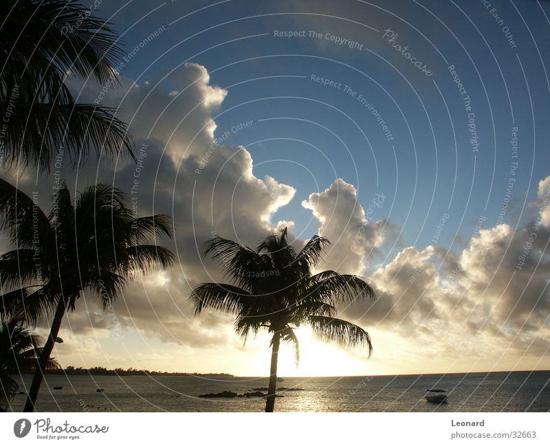 Sky Tree Sun Ocean Beach Clouds Watercraft Horizon