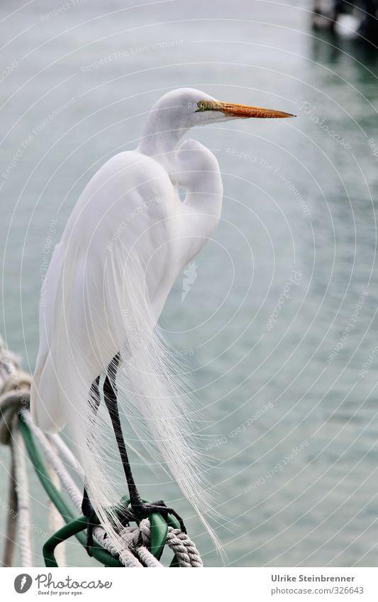 Beautiful Water White Calm Animal Coast Bird Wind Wild animal Elegant Wait Stand Feather Point Posture Harbour