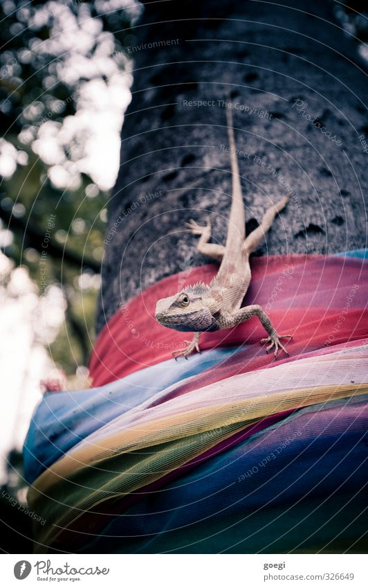 Nature Plant Tree Animal Wild Wait Observe Exotic Thorny Patient Rag Reptiles Coil Love of animals Agamidae