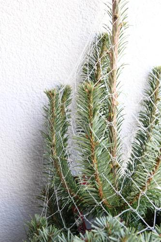 oh fir tree Christmas & Advent Environment Nature Winter Plant Tree Fir tree Spruce Fir branch Fir needle Sign Christmas tree Stand Wait Authentic Fresh