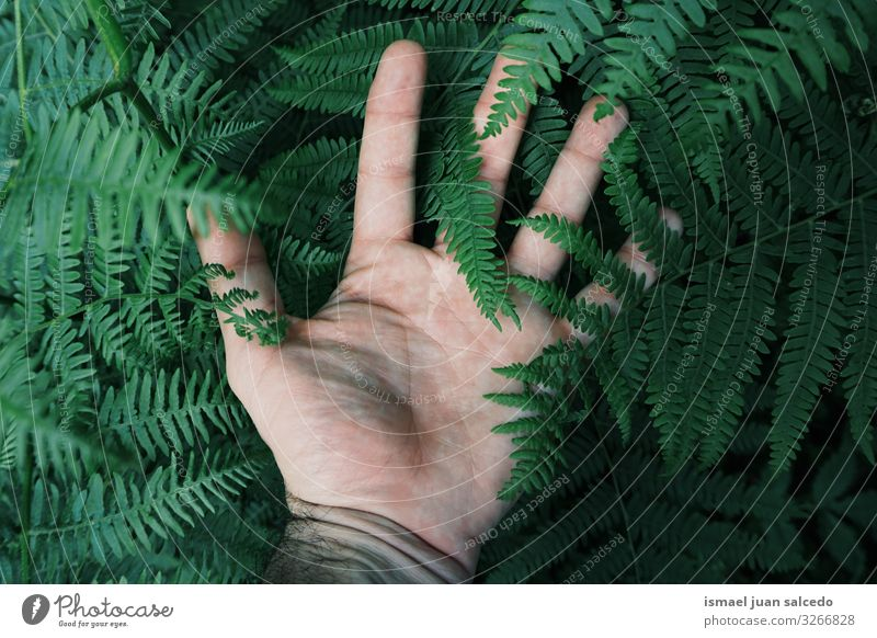 man hand touching the green ferns feeling the nature Hand Plant Green Fingers body part Emotions Touch Sense of touch Garden Floral Nature Natural Fresh