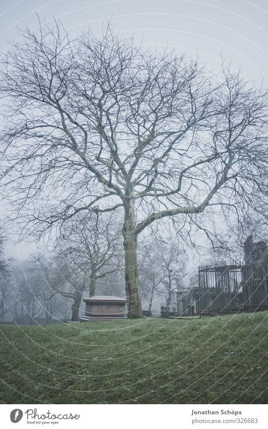 Old Tree Dark Cold Death Gray Park Fog Gloomy Dangerous Esthetic Grief Historic Creepy Bleak Cemetery