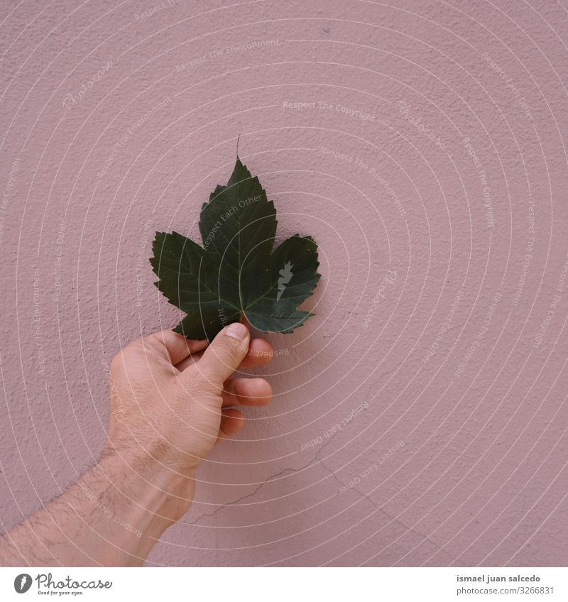 hand with a green leaf on the pink wall Hand Leaf Green Wall (building) Pink Fingers body part Hold Emotions Touch Nature Fresh Sunlight Bright Exterior shot