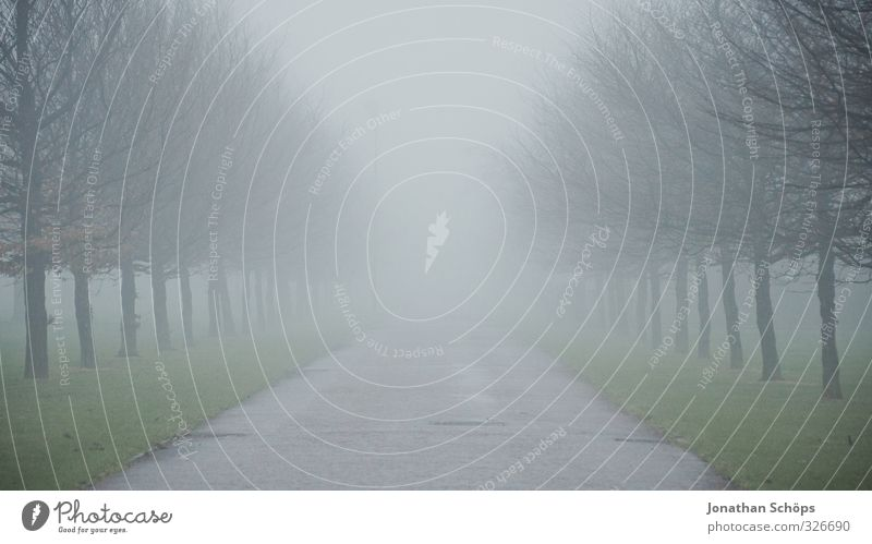 Tree Winter Dark Cold Lanes & trails Gray Park Fog Gloomy Free Empty Places Esthetic Middle Expressionless Creepy