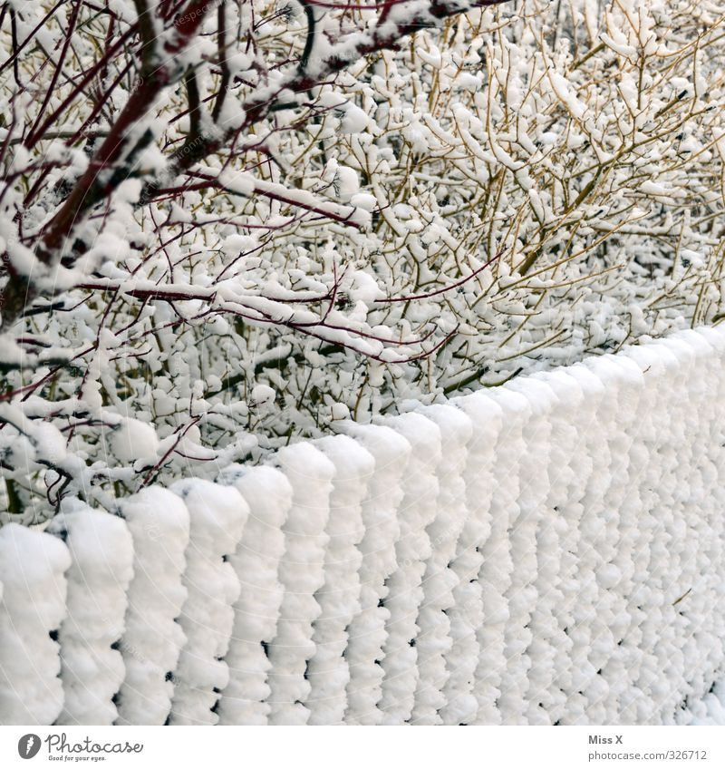 winter's day Winter Snow Winter vacation Ice Frost Snowfall Bushes Garden Cold Fence Snow layer Winter mood Branch Twig Colour photo Subdued colour
