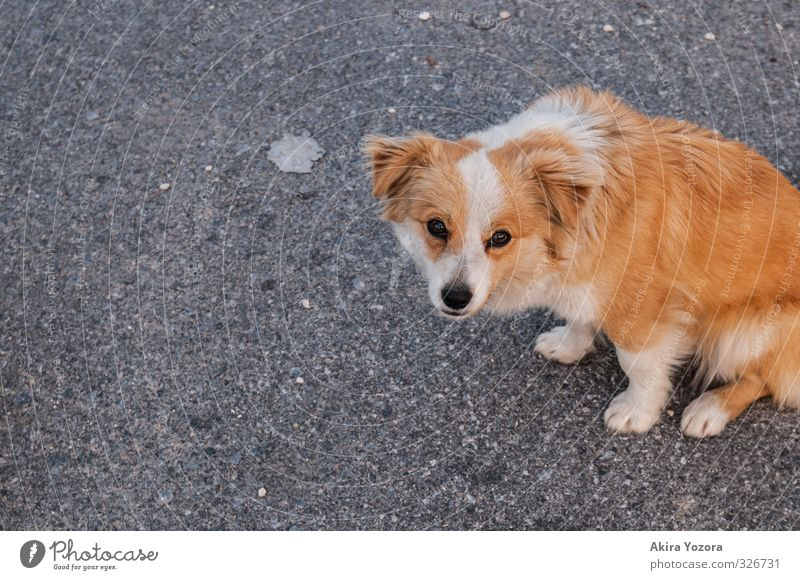 Dog White Loneliness Animal Black Baby animal Street Sadness Orange Sit Free Cute Observe Ground Protection Hope