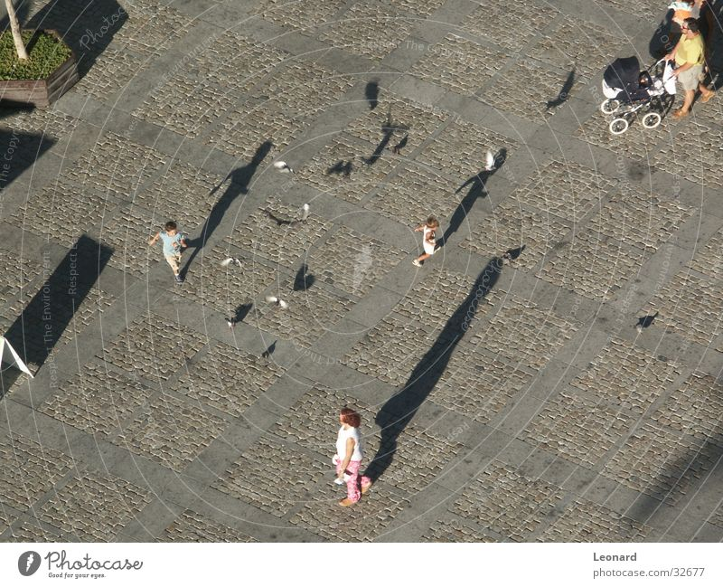 shadow Human being Story Child Pigeon Bird Group Ground Movement Corner Shadow