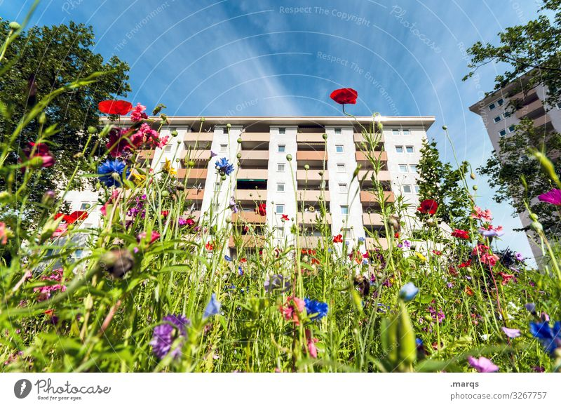 urban gardening Apartment house Sky Summer Town wild flower Nature sustainability wild meadow variegated Urban gardening downtown