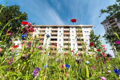 urban gardening Apartment house Sky Summer Town wild flower Nature sustainability wild meadow variegated Urban gardening downtown