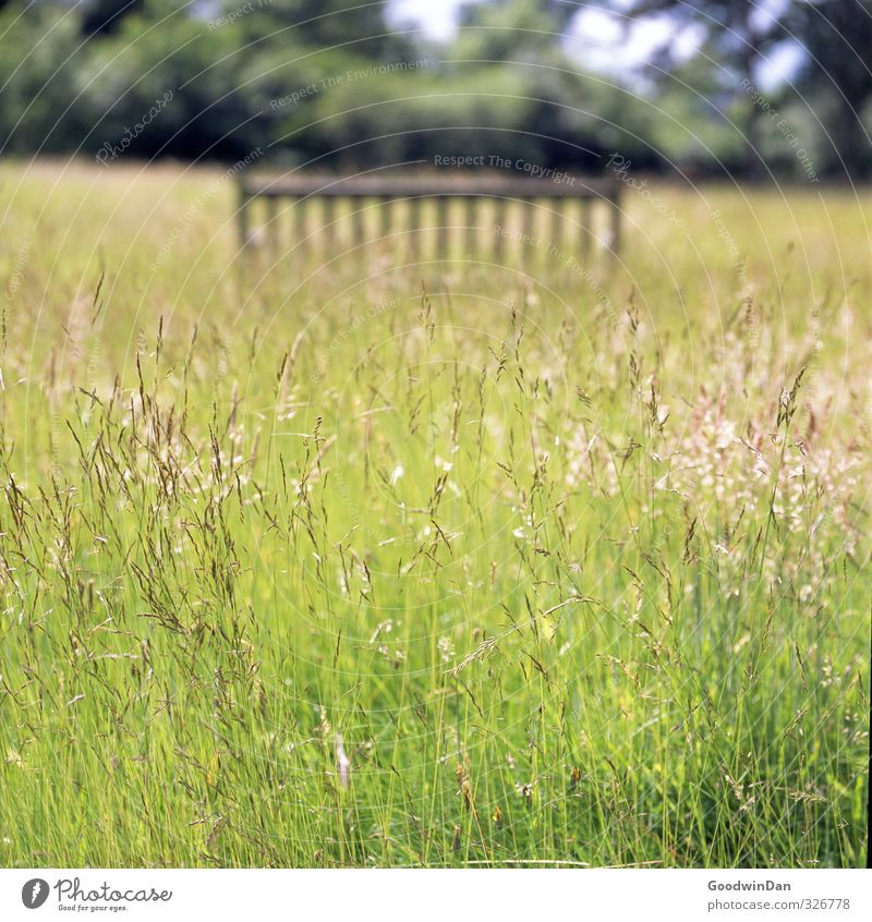 Barefoot through the grass. Environment Nature Plant Elements Bushes Park Meadow Movement Fragrance Free Beautiful Many Warmth Moody Colour photo Exterior shot