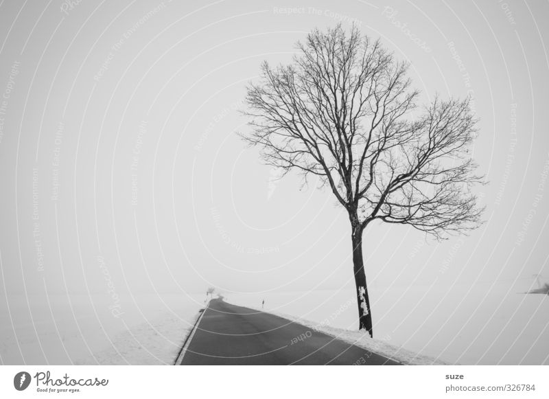 late Winter Snow Environment Nature Landscape Sky Fog Tree Field Transport Traffic infrastructure Street Lanes & trails Sadness Esthetic Authentic Infinity