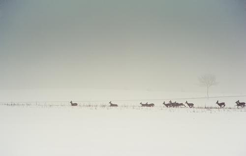 Sky Nature Landscape Animal Winter Cold Environment Snow Gray Horizon Field Fog Wild Wild animal Authentic Elements