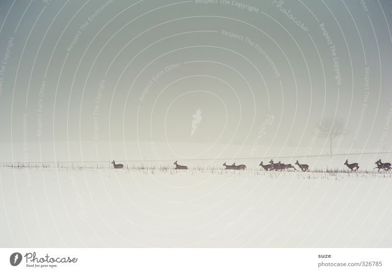 surrender to rehabilitation Hunting Environment Nature Landscape Animal Elements Sky Cloudless sky Horizon Winter Fog Snow Field Wild animal Group of animals