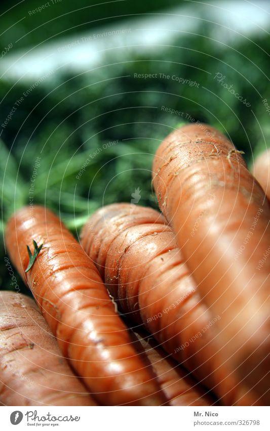 happy birthday fottokäääs Food Vegetable Nutrition Organic produce Diet Carrot Healthy Vegetarian diet Fresh Delicious Orange Ingredients Harvest Crunchy
