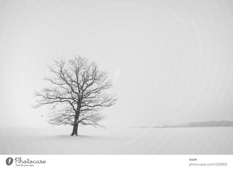 Silent in the snow Winter Snow Environment Nature Landscape Plant Elements Sky Cloudless sky Horizon Climate Fog Tree Sadness Authentic Bright Cold Natural