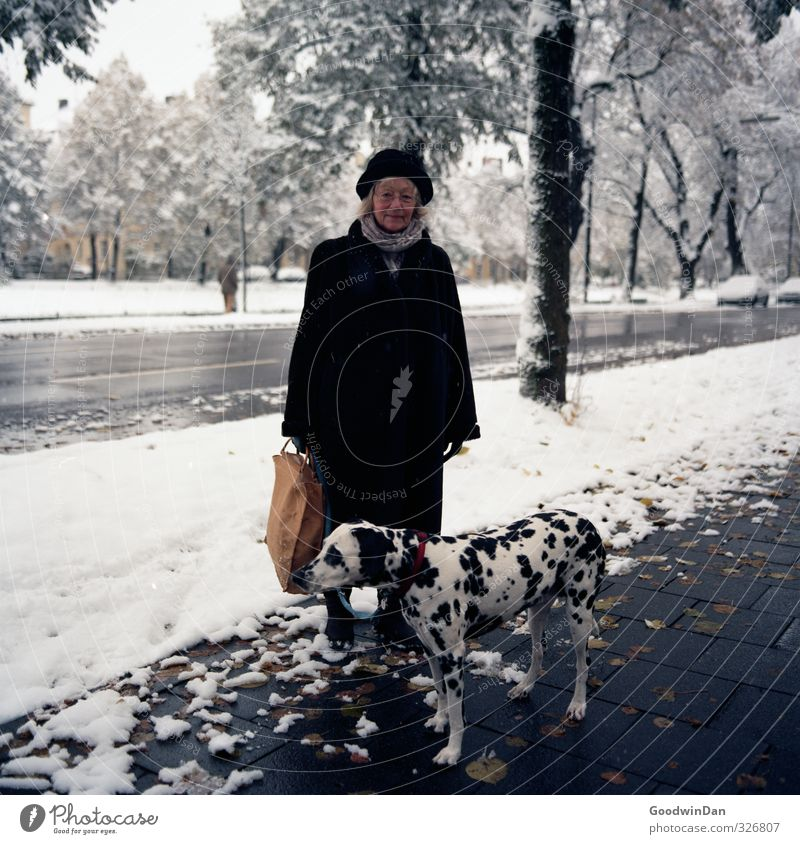 Dog Human being Woman Nature Old City Beautiful Tree Animal Winter Adults Environment Street Snow Senior citizen Feminine
