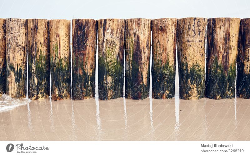 Groyne partlially covered with algae on a beach Vacation & Travel Tourism Beach Ocean Sand Wet Protection Break water background post row wood Exterior shot