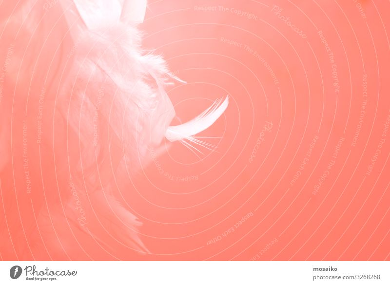 feathers on pink background Lifestyle Luxury Elegant Style Design Exotic Beautiful Skin Cosmetics Make-up Healthy Wellness Harmonious Well-being Contentment