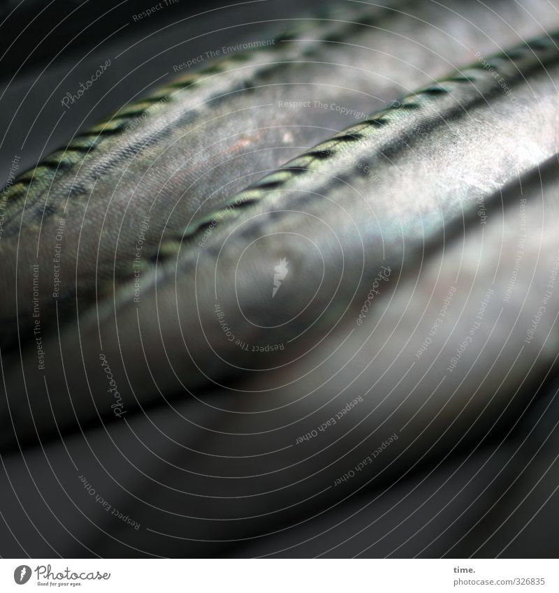 Watermark | Involuntary shore leave Food Fish Nutrition Scales Trout 3 Animal Lie Dark Naked Death Equal Arrangement Transience Change Colour photo