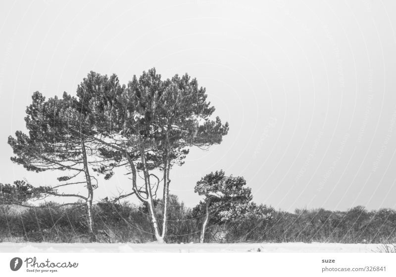 Black and white grey in winter. Environment Nature Landscape Elements Sky Cloudless sky Winter Snow Tree Bushes Esthetic Cold Gloomy Emotions Sadness Loneliness