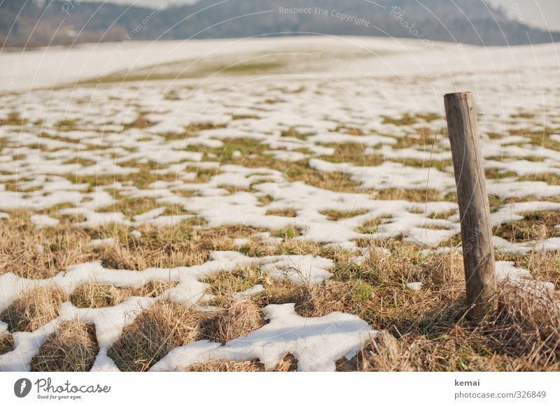 thaw Environment Nature Landscape Spring Winter Beautiful weather Ice Frost Snow Plant Grass Foliage plant Meadow Field Pole Wood Brown Green Individual Thaw
