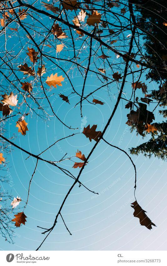 Sky Nature Tree Leaf Autumn Environment Esthetic Beautiful weather Cloudless sky