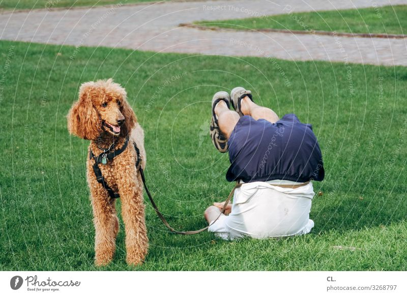 quadrupeds Healthy Athletic Fitness Harmonious Sports Sports Training Yoga Human being Masculine Man Adults Legs 1 Grass Park Meadow Animal Dog Animal face